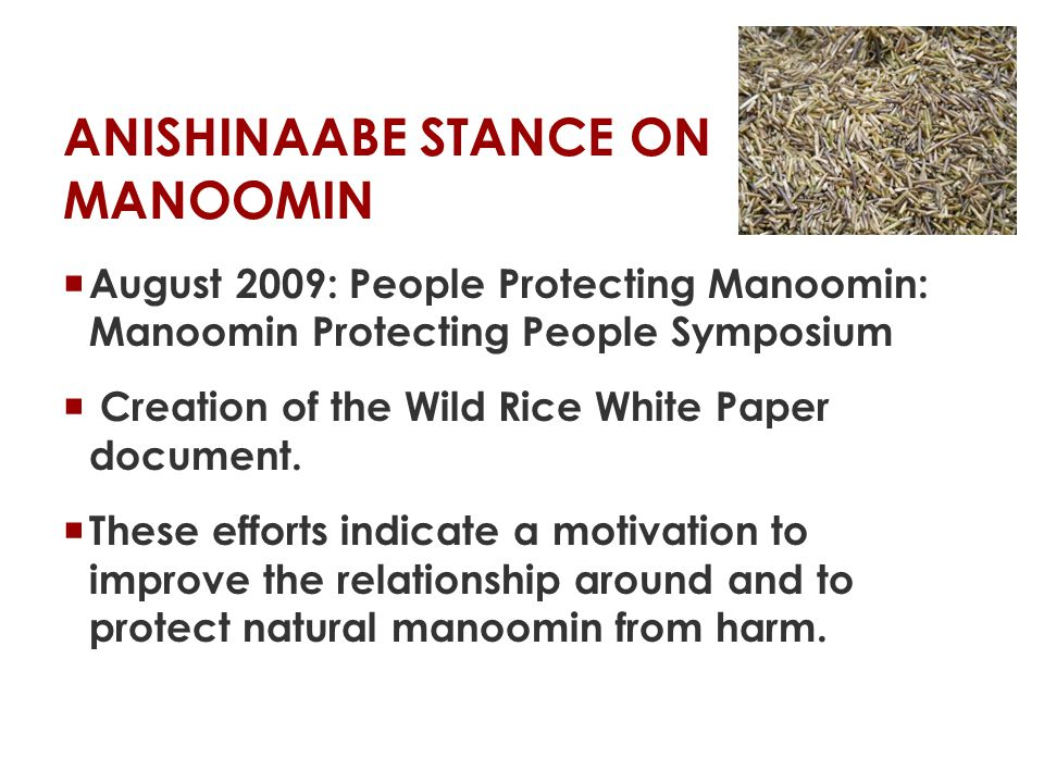 ANISHINAABE STANCE ON MANOOMIN  We are willing to collaborate on research projects with goals such as protecting manoomin from genetic contamination and environmental degradation.