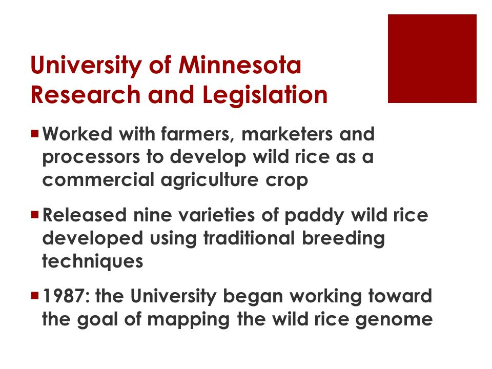 University of Minnesota Research and Legislation  Worked with farmers, marketers and processors to develop wild rice as a commercial agriculture crop  Released nine varieties of paddy wild rice developed using traditional breeding techniques  1987: the University began working toward the goal of mapping the wild rice genome
