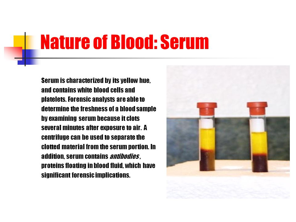 Nature of Blood: Serum Serum is characterized by its yellow hue, and contains white blood cells and platelets. Forensic analysts are able to determine