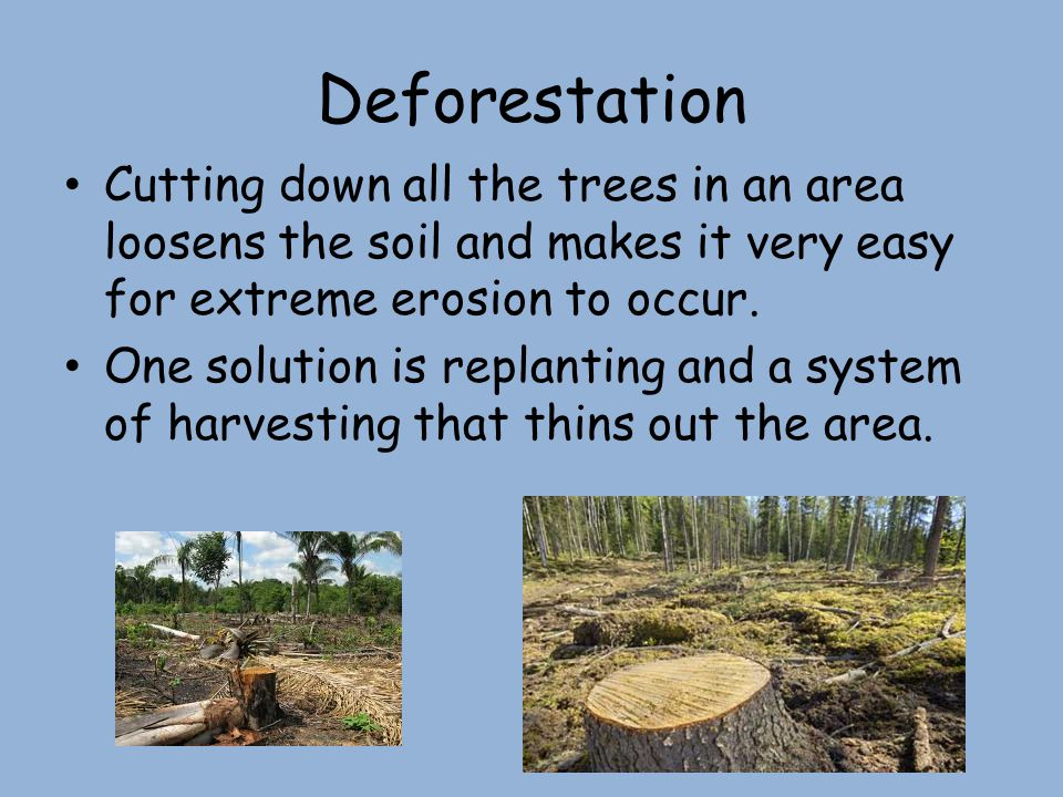 Deforestation Cutting down all the trees in an area loosens the soil and makes it very easy for extreme erosion to occur. One solution is replanting a