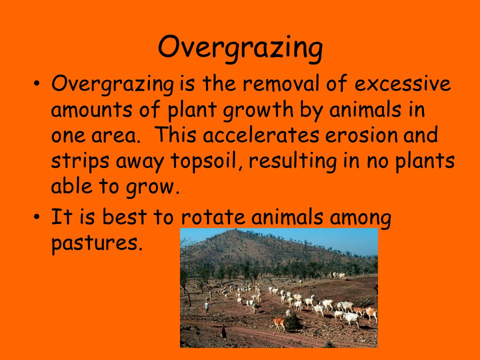 Overgrazing Overgrazing is the removal of excessive amounts of plant growth by animals in one area. This accelerates erosion and strips away topsoil,