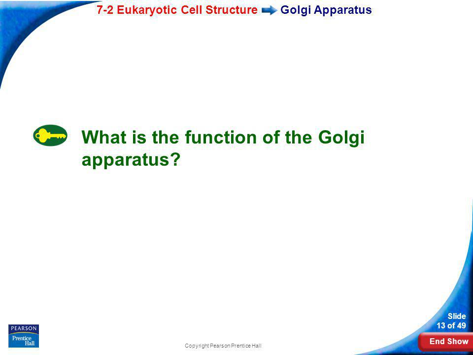 End Show 7-2 Eukaryotic Cell Structure Slide 13 of 49 Copyright Pearson Prentice Hall Golgi Apparatus What is the function of the Golgi apparatus?