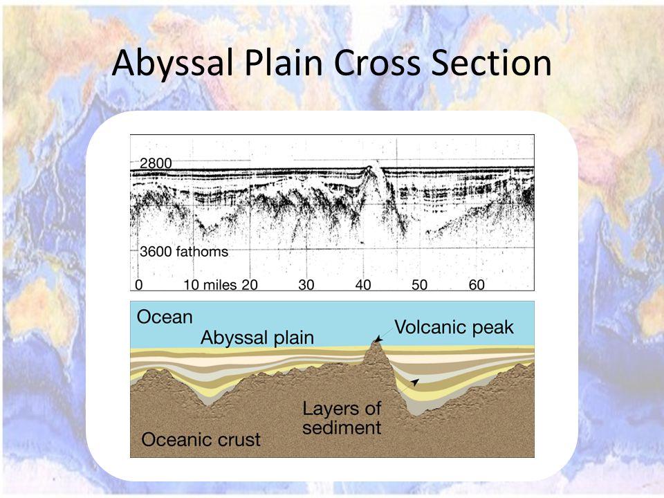Abyssal Plain Cross Section