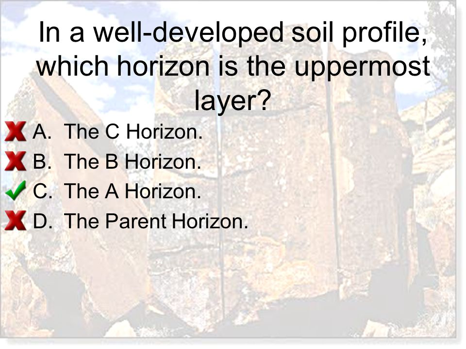 In a well-developed soil profile, which horizon is the uppermost layer? A.The C Horizon. B.The B Horizon. C.The A Horizon. D.The Parent Horizon.