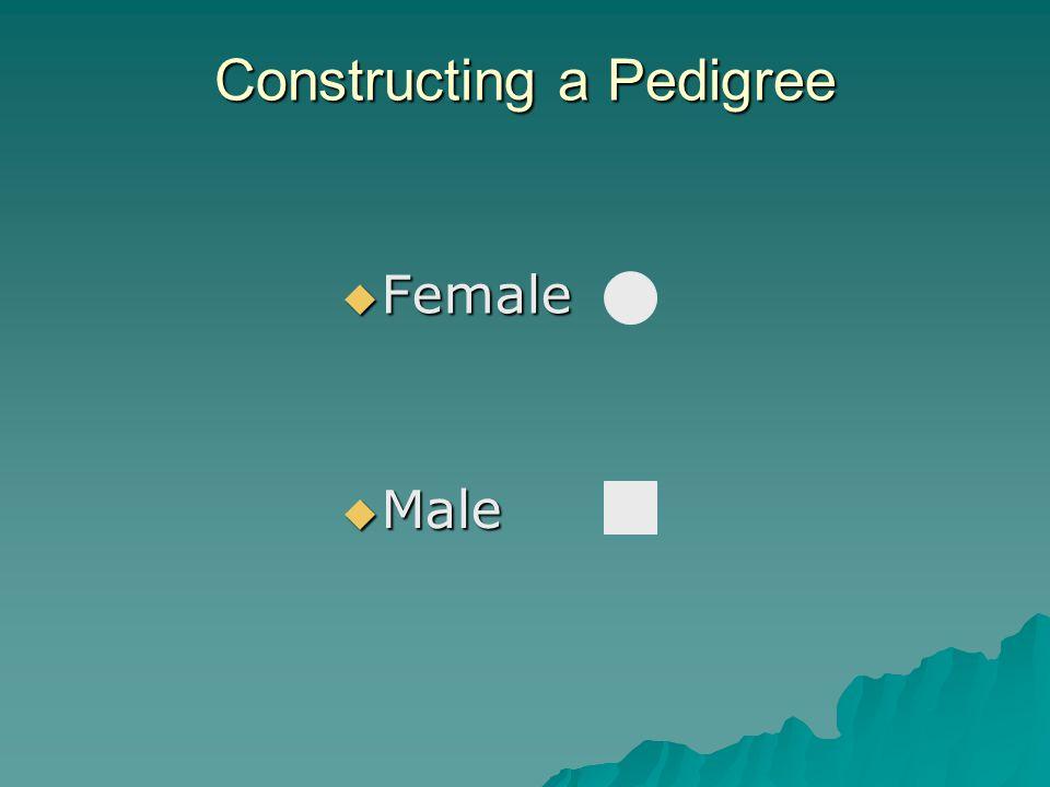 Constructing a Pedigree  Male  Female
