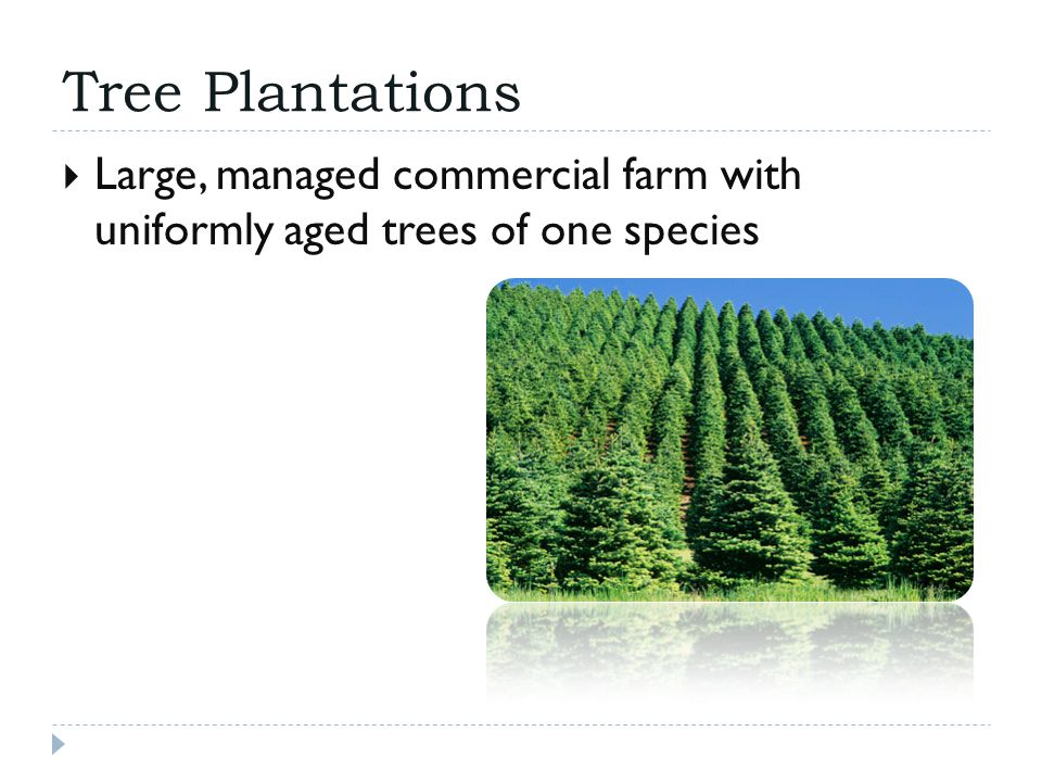 Tree Plantations  Large, managed commercial farm with uniformly aged trees of one species