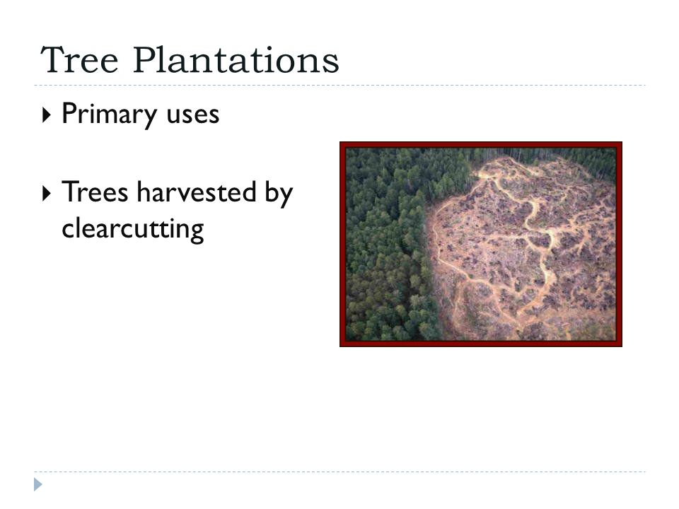 Tree Plantations  Primary uses  Trees harvested by clearcutting