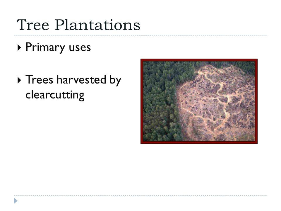 Tree Plantations  Species choice 1. 2. 3.