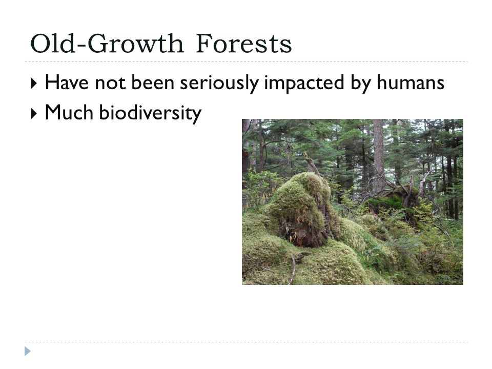 Old-Growth Forests  Have not been seriously impacted by humans  Much biodiversity