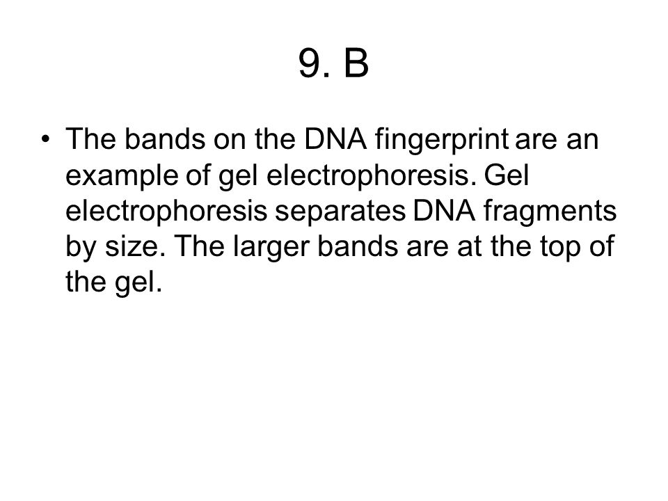 9. B The bands on the DNA fingerprint are an example of gel electrophoresis.