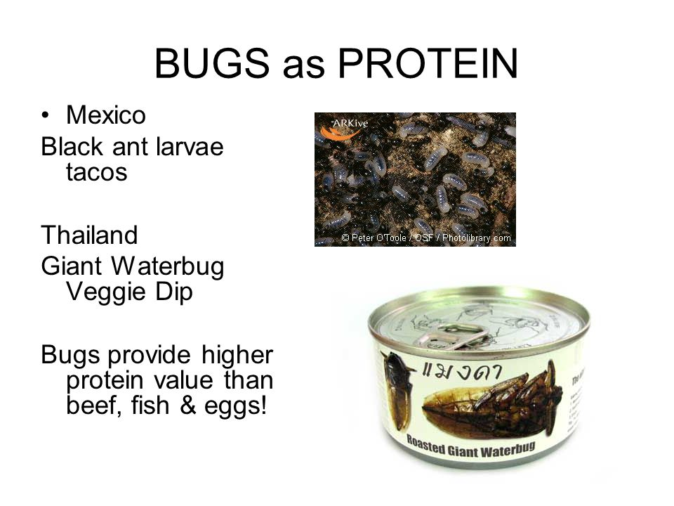 BUGS as PROTEIN Mexico Black ant larvae tacos Thailand Giant Waterbug Veggie Dip Bugs provide higher protein value than beef, fish & eggs!