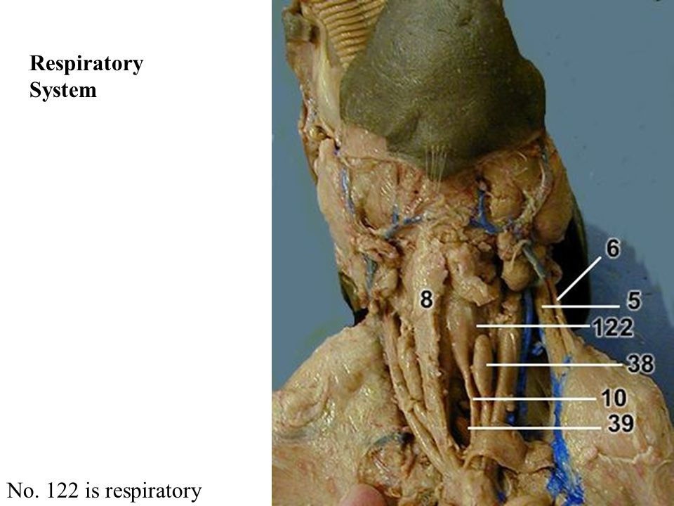 No. 122 is respiratory Respiratory System