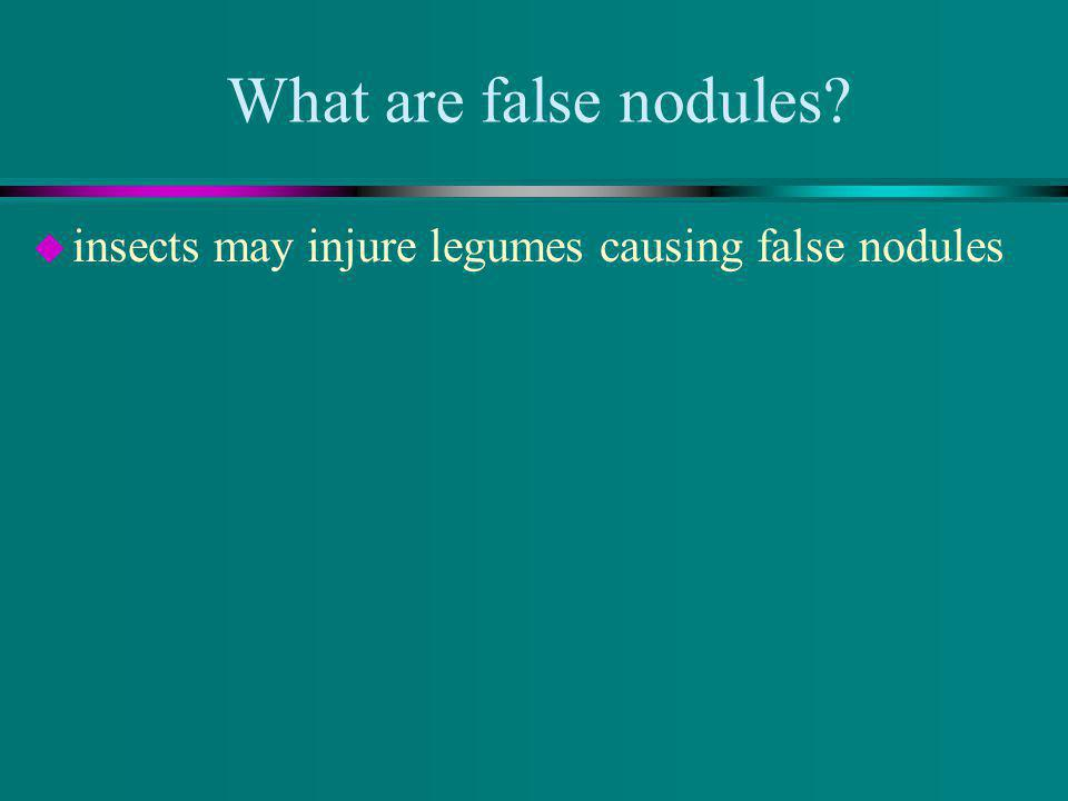 What are false nodules u insects may injure legumes causing false nodules