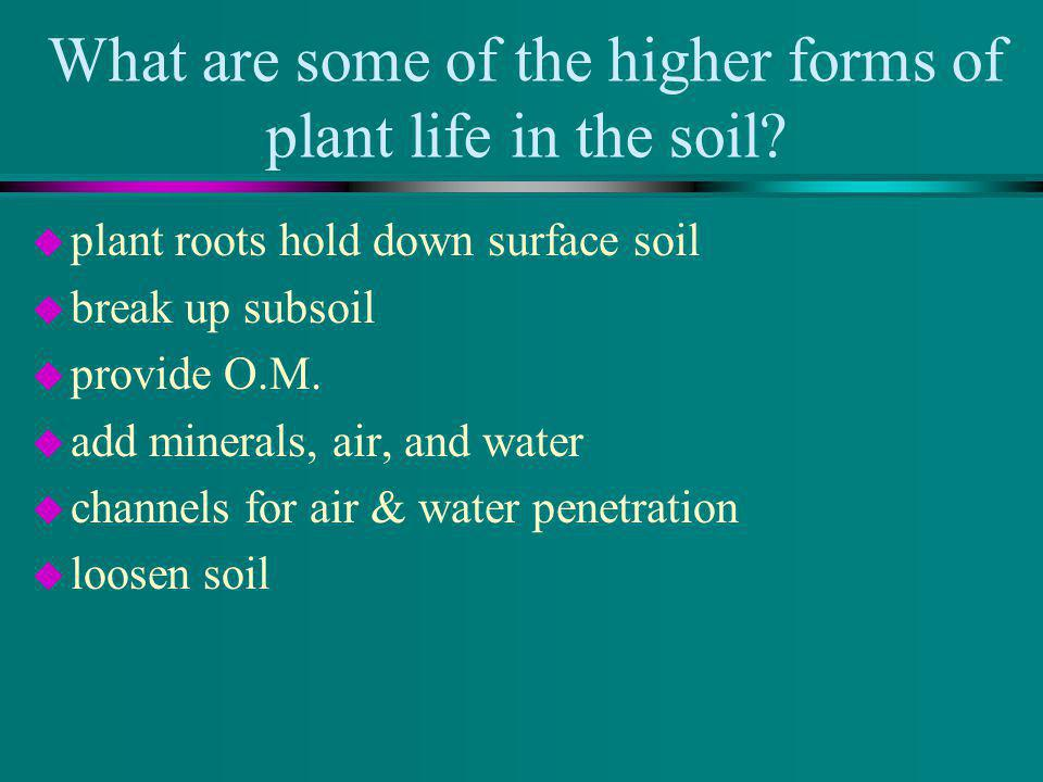 What are some of the higher forms of plant life in the soil? u plant roots hold down surface soil u break up subsoil u provide O.M. u add minerals, ai