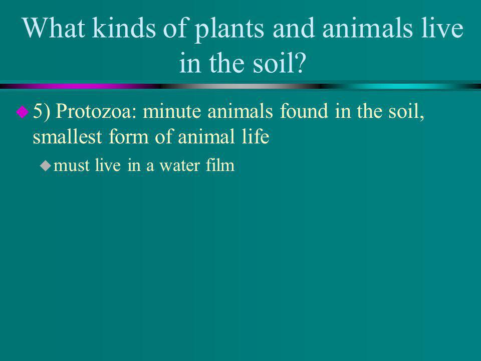 What kinds of plants and animals live in the soil.