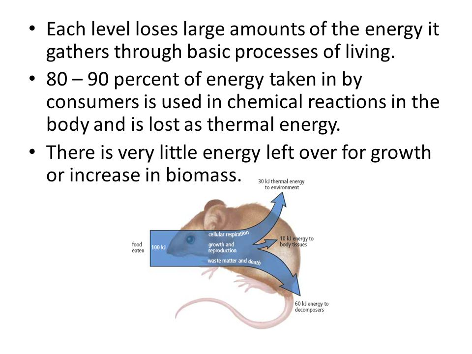 Each level loses large amounts of the energy it gathers through basic processes of living. 80 – 90 percent of energy taken in by consumers is used in