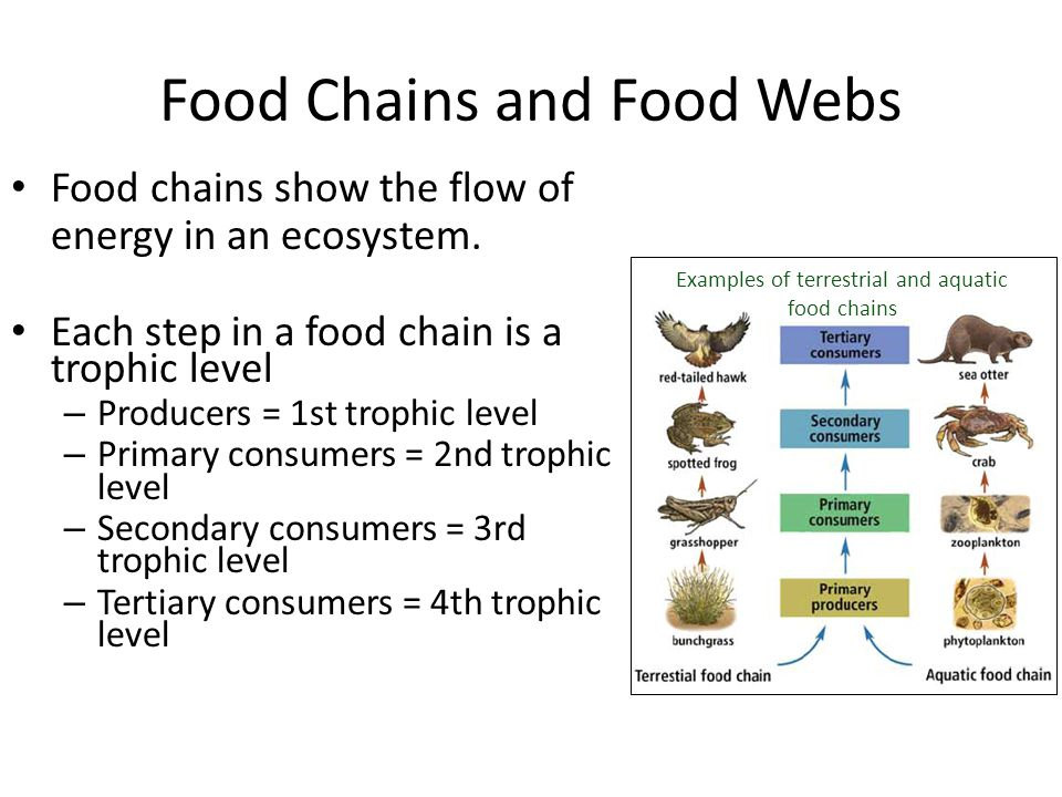 Food Chains and Food Webs Food chains show the flow of energy in an ecosystem. Each step in a food chain is a trophic level – Producers = 1st trophic