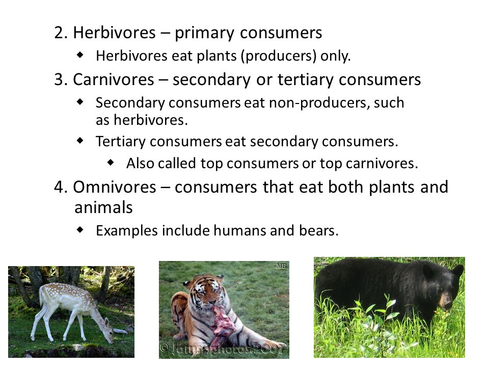 Energy Flow and Energy Loss in Ecosystems:Food Webs Most organisms are part of many food chains.