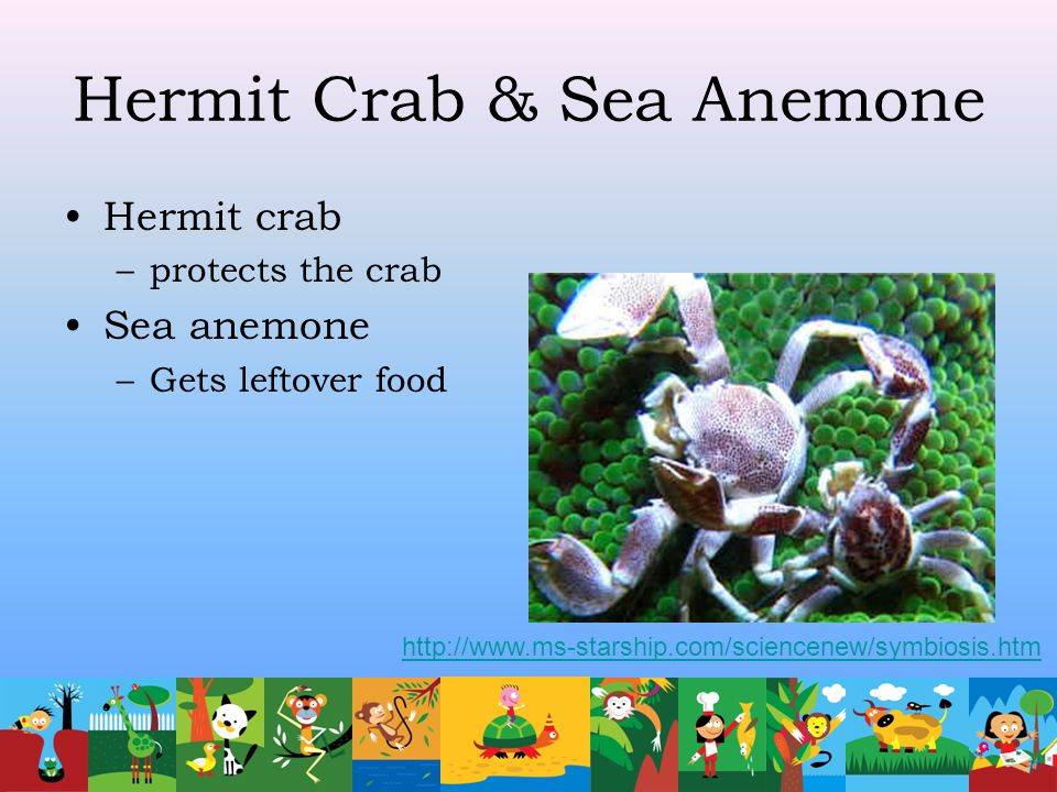 Hermit Crab & Sea Anemone Hermit crab –protects the crab Sea anemone –Gets leftover food http://www.ms-starship.com/sciencenew/symbiosis.htm