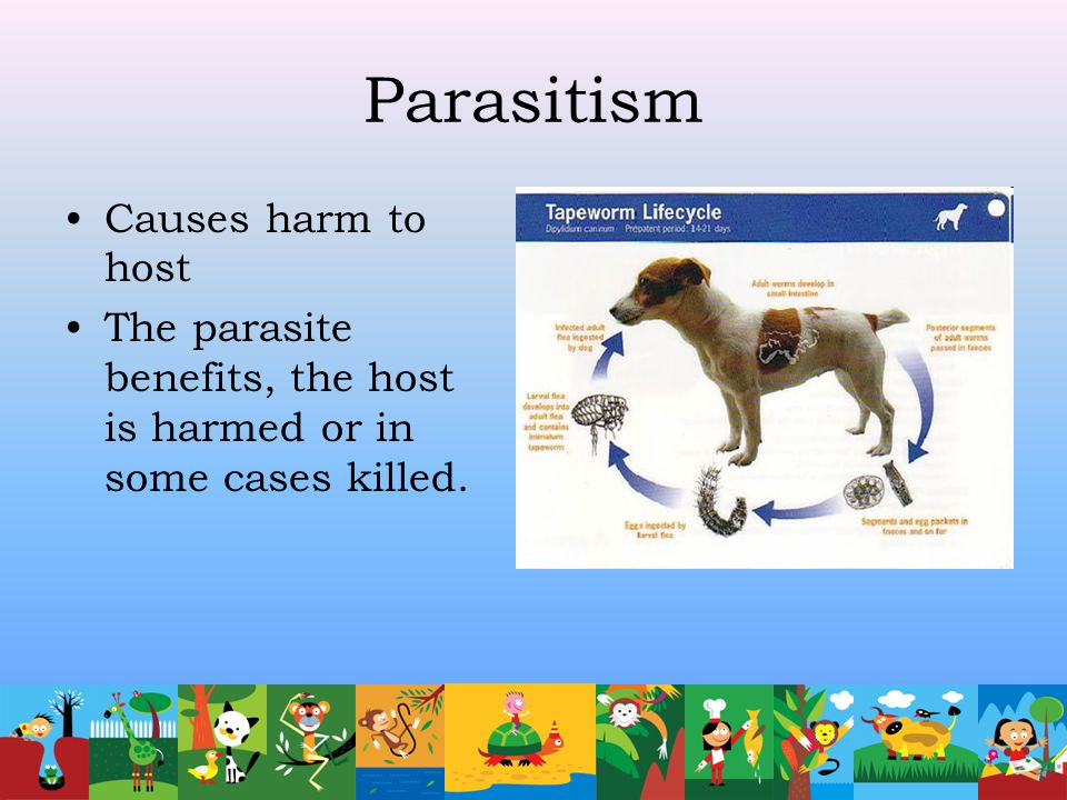 Parasitism Causes harm to host The parasite benefits, the host is harmed or in some cases killed.