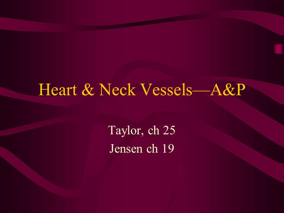 Heart & Neck Vessels—A&P Taylor, ch 25 Jensen ch 19