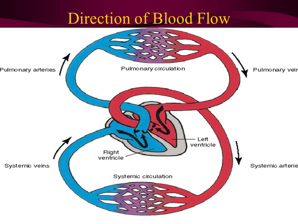 Direction of Blood Flow