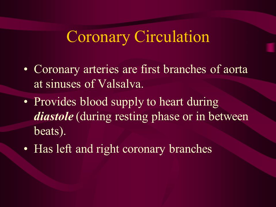 Left Coronary Artery 2 branches: –Left circumflex—goes to left atrium, lateral and posterior ventricles –Left anterior descending ( widow maker )— goes to anterior and apex of LV, anterior septum, bundle of His, right and left bundle branches