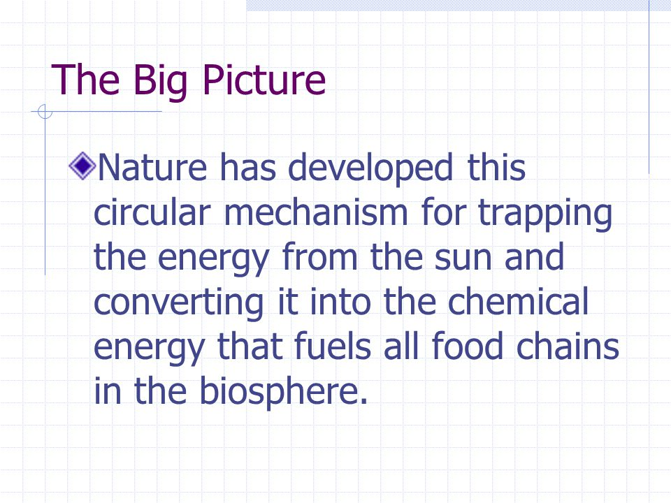 The Big Picture Nature has developed this circular mechanism for trapping the energy from the sun and converting it into the chemical energy that fuels all food chains in the biosphere.