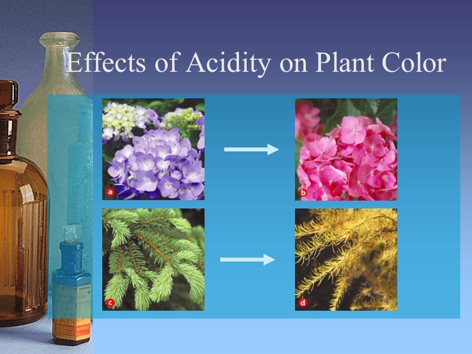 Effects of Acidity on Plant Color