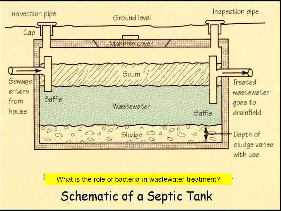 What is the role of bacteria in wastewater treatment?
