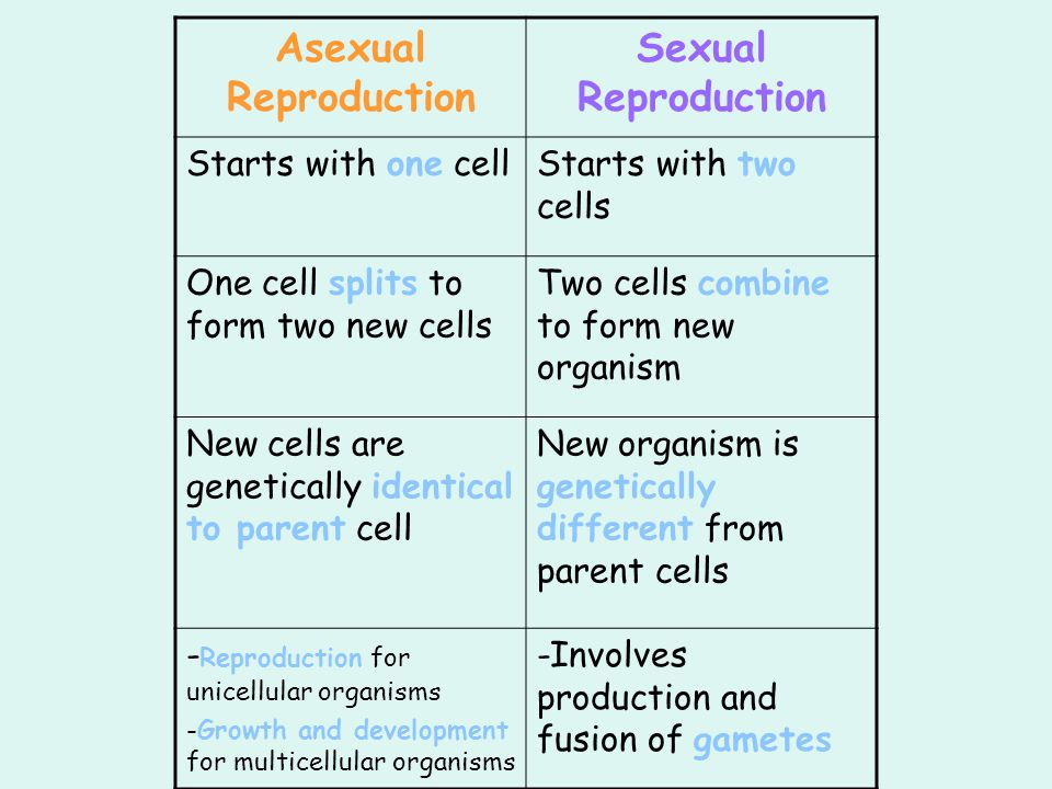 Asexual Reproduction Sexual Reproduction Starts with one cellStarts with two cells One cell splits to form two new cells Two cells combine to form new organism New cells are genetically identical to parent cell New organism is genetically different from parent cells - Reproduction for unicellular organisms -Growth and development for multicellular organisms -Involves production and fusion of gametes