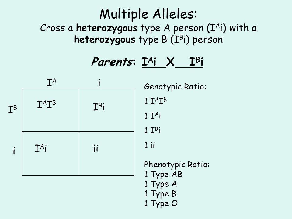 Multiple Alleles: Cross a heterozygous type A person (I A i) with a heterozygous type B (I B i) person Parents: I A i X I B i IAIA i IBIB i IAIBIAIB I