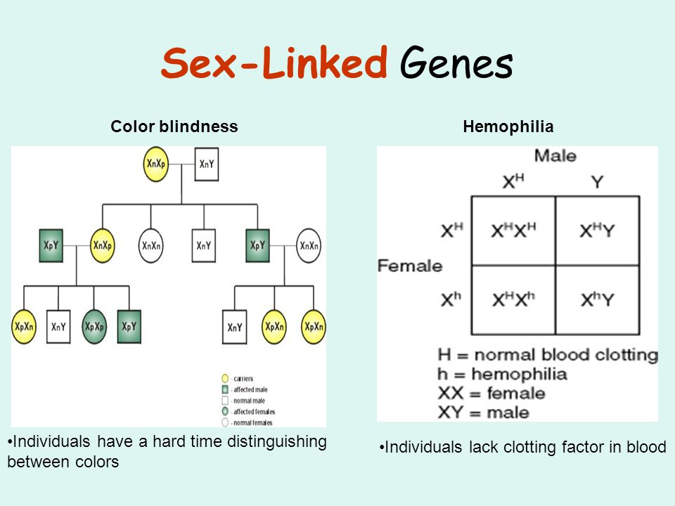 Sex-Linked Genes Color blindnessHemophilia Individuals lack clotting factor in blood Individuals have a hard time distinguishing between colors