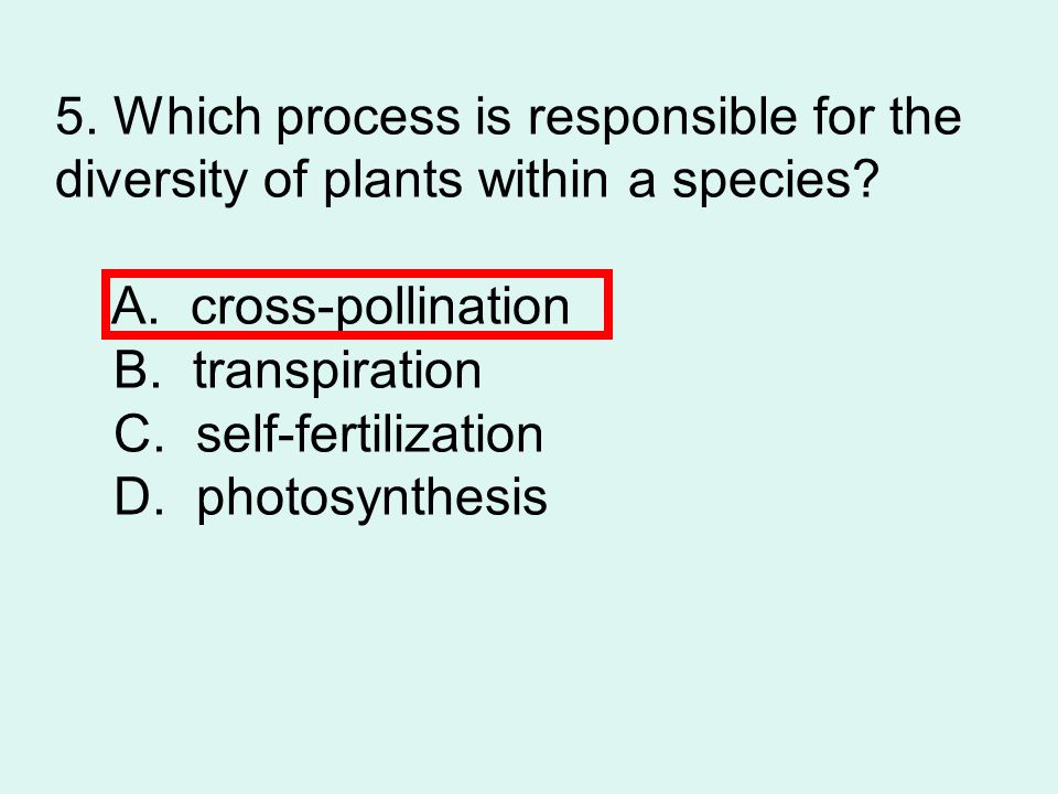 5.Which process is responsible for the diversity of plants within a species.