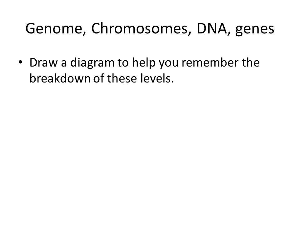 Genome, Chromosomes, DNA, genes Draw a diagram to help you remember the breakdown of these levels.