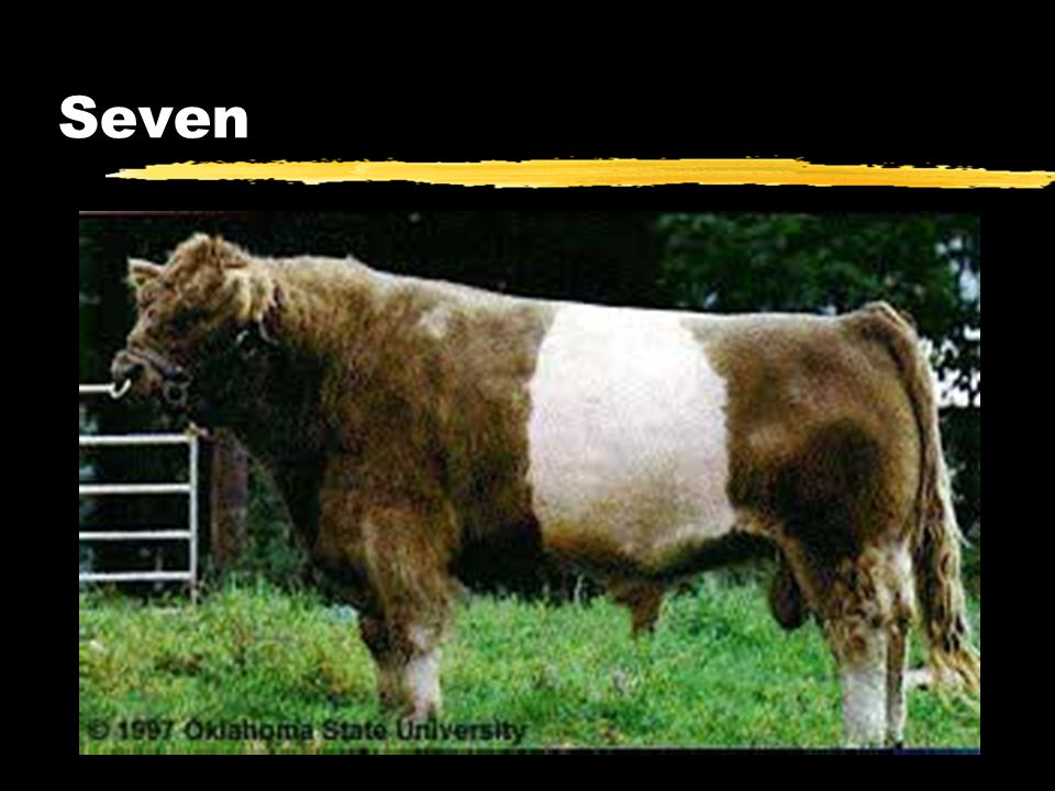Directions Dairy Identification zNumber your paper from 8-12 zIdentify each breed of dairy cattle.