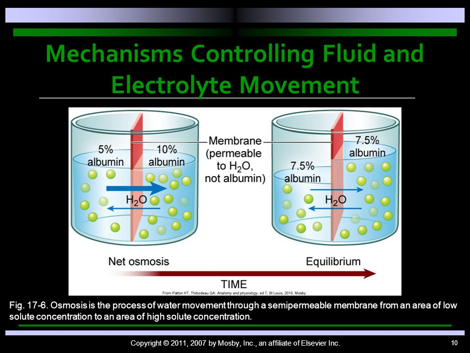 10 Mechanisms Controlling Fluid and Electrolyte Movement Copyright © 2011, 2007 by Mosby, Inc., an affiliate of Elsevier Inc. Fig. 17-6. Osmosis is th