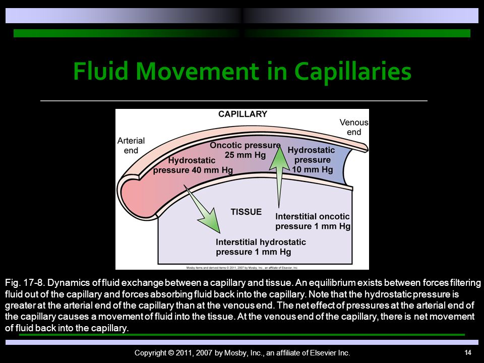 14 Fluid Movement in Capillaries Copyright © 2011, 2007 by Mosby, Inc., an affiliate of Elsevier Inc.