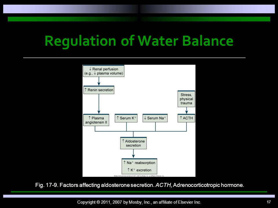 17 Regulation of Water Balance Copyright © 2011, 2007 by Mosby, Inc., an affiliate of Elsevier Inc.