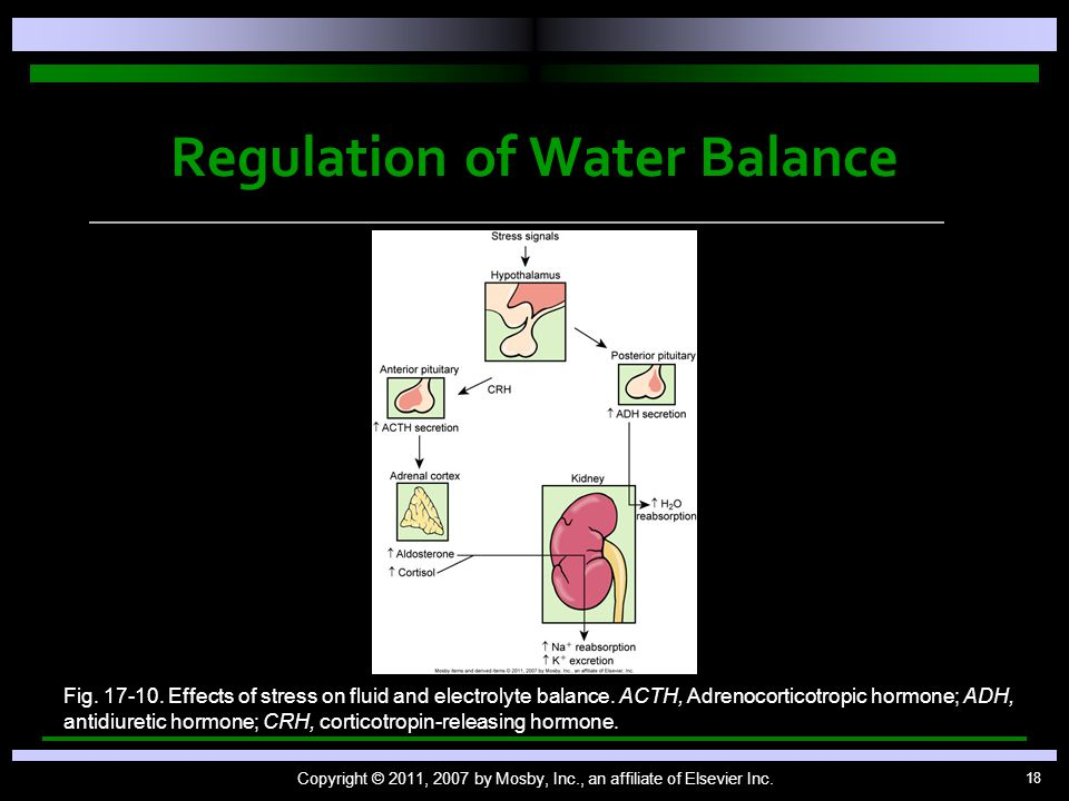 18 Regulation of Water Balance Copyright © 2011, 2007 by Mosby, Inc., an affiliate of Elsevier Inc. Fig. 17-10. Effects of stress on fluid and electro