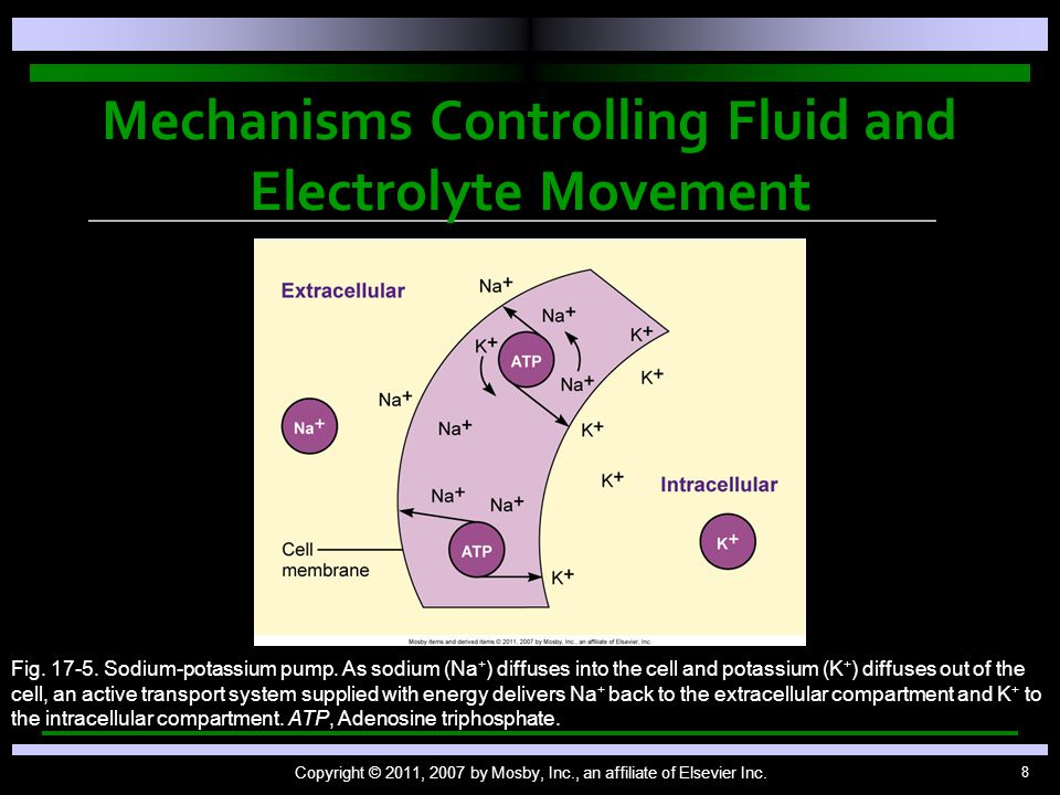 8 Mechanisms Controlling Fluid and Electrolyte Movement Copyright © 2011, 2007 by Mosby, Inc., an affiliate of Elsevier Inc. Fig. 17-5. Sodium-potassi