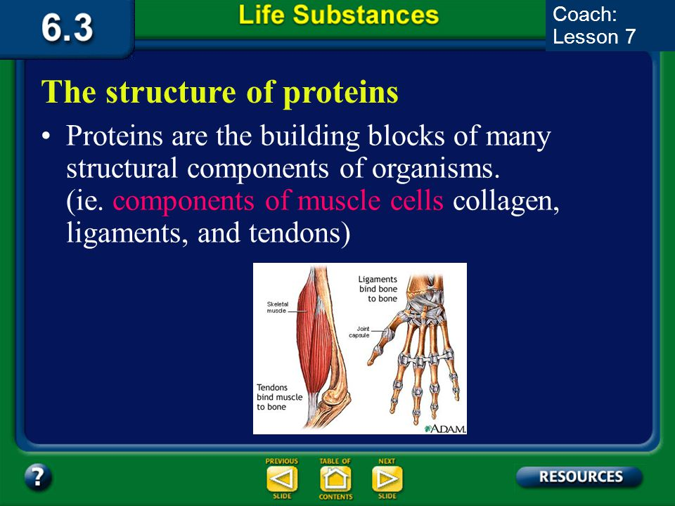 6.3 Section Summary 6.3 – pages 157-163 A protein is a large, complex polymer composed of carbon, hydrogen, oxygen, nitrogen, and sometimes sulfur. Th
