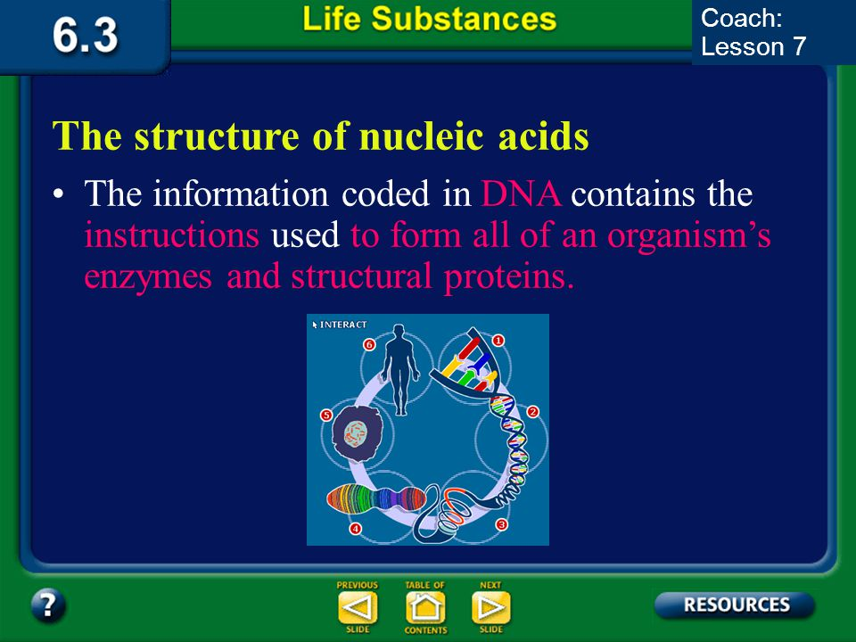 6.3 Section Summary 6.3 – pages 157-163 DNA, which stands for deoxyribonucleic acid is a nucleic acid. The structure of nucleic acids Nitrogenous base