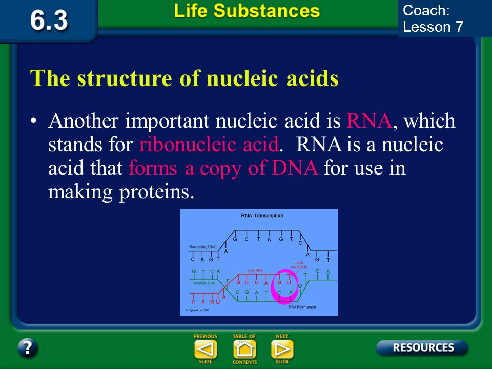 6.3 Section Summary 6.3 – pages 157-163 The structure of nucleic acids The information coded in DNA contains the instructions used to form all of an o