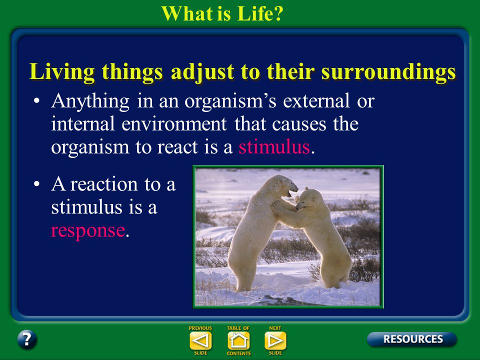 Section 1.1 Summary – pages 3-10 5. Respond to Stimuli Characteristics of Living Things What is Life?