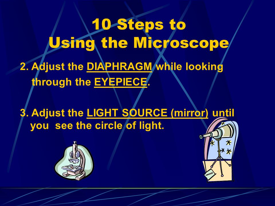 Follow these instructions when using the microscope. Click on each underlined word. 1. To carry the microscope, grasp the ARM with one hand. Hold the
