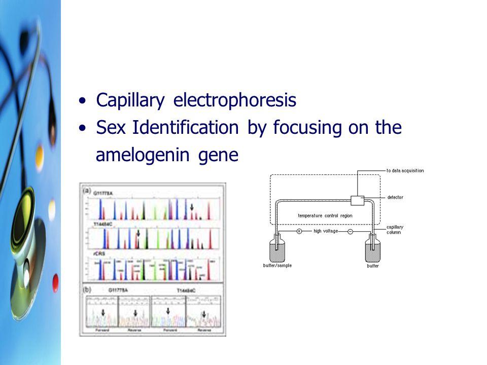 Capillary electrophoresis Sex Identification by focusing on the amelogenin gene