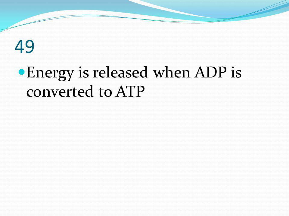49 Energy is released when ADP is converted to ATP