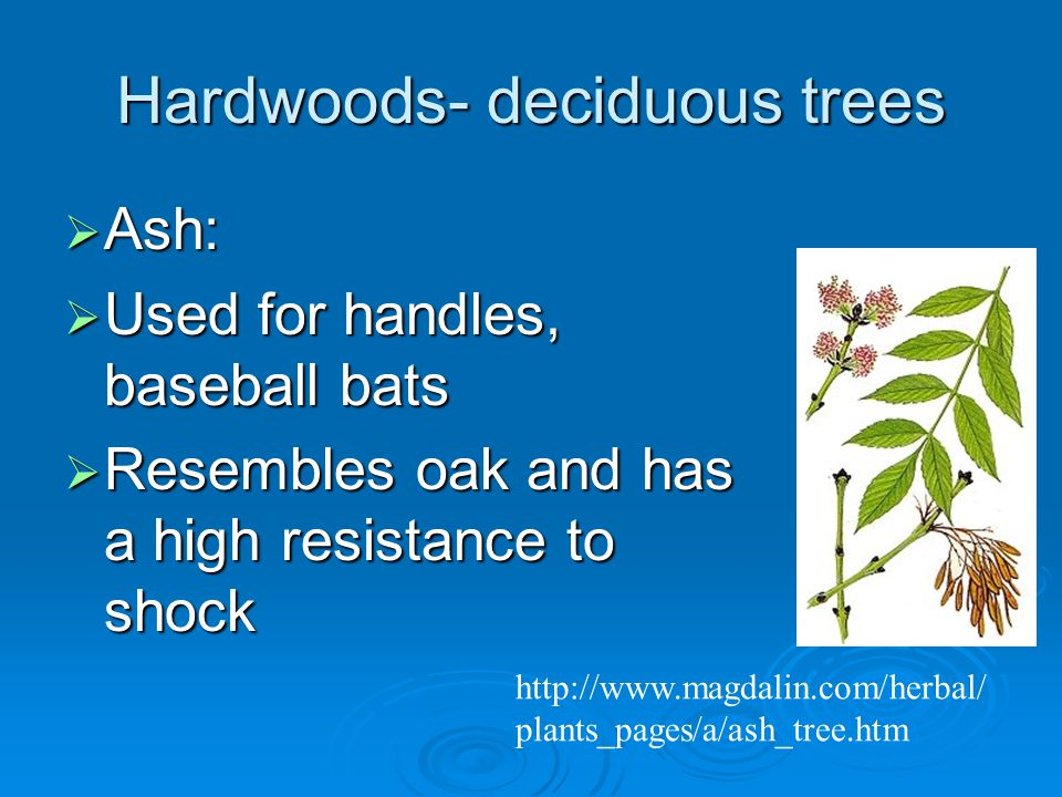 Hardwoods- deciduous trees  Ash:  Used for handles, baseball bats  Resembles oak and has a high resistance to shock   plants_pages/a/ash_tree.htm