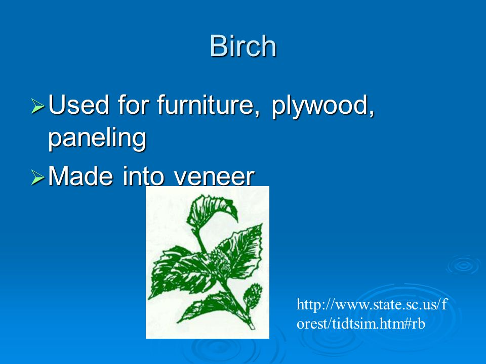 Birch  Used for furniture, plywood, paneling  Made into veneer   orest/tidtsim.htm#rb